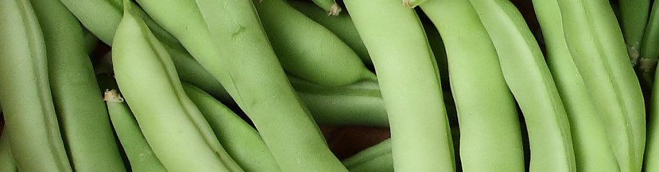 'Freshly picked beans' by Benjamin Miller
