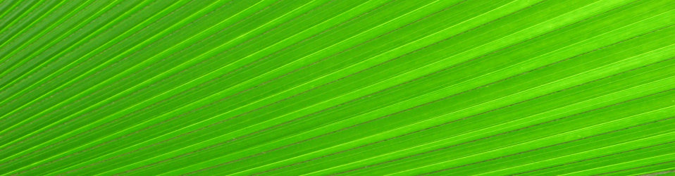 'A bright green tropical leaf' by Benjamin Miller
