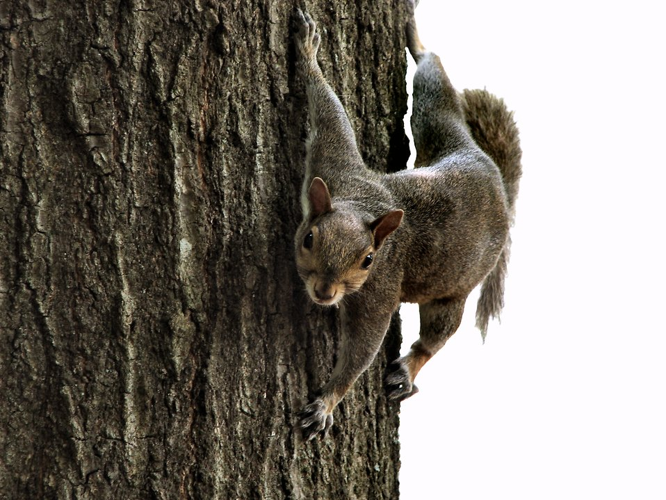 squirrel on tree : Free Stock Photo