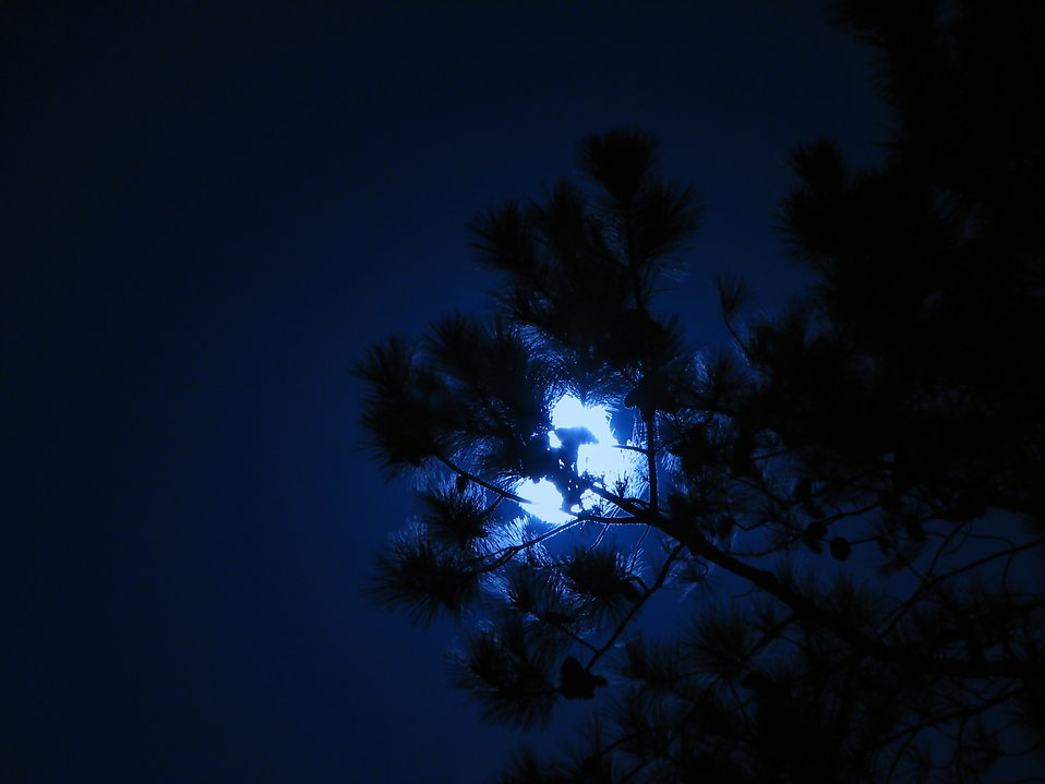 Moon behind tree : Free Stock Photo