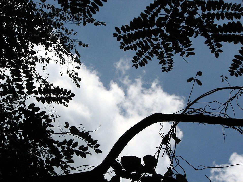 Blue sky through trees : Free Stock Photo