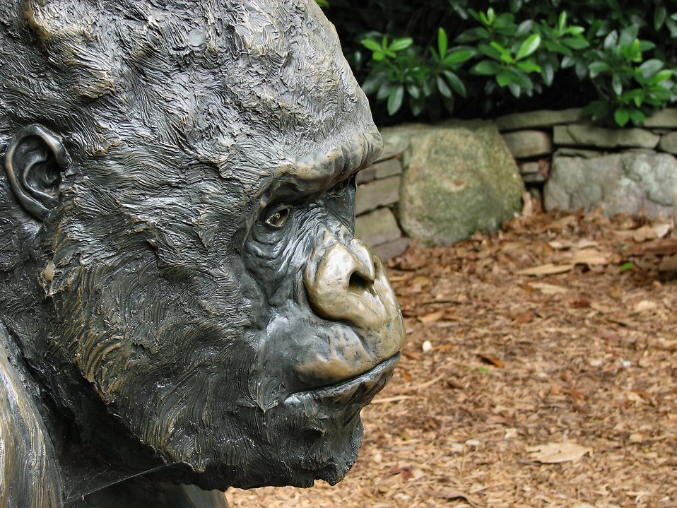 Gorilla statue portrait : Free Stock Photo