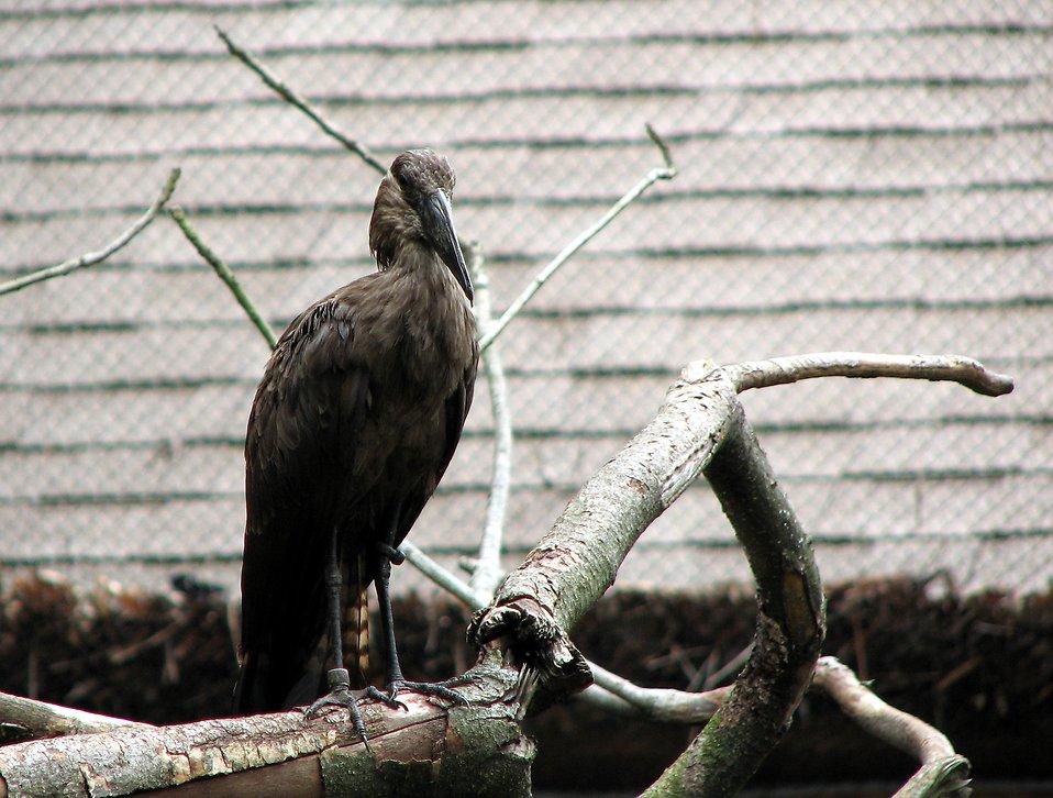 Black bird : Free Stock Photo