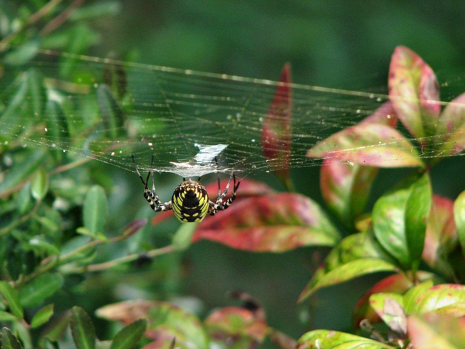 Yellow spider : Free Stock Photo