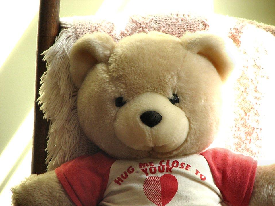 Teddy bear : Free Stock Photo