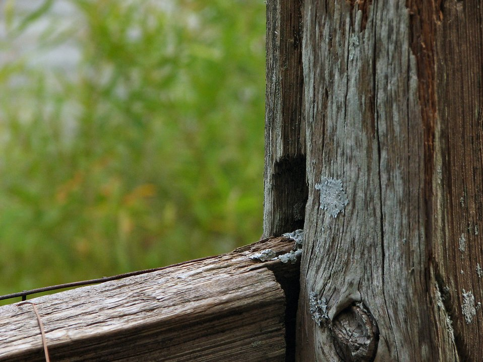 Closeup of wooden fence : Free Stock Photo
