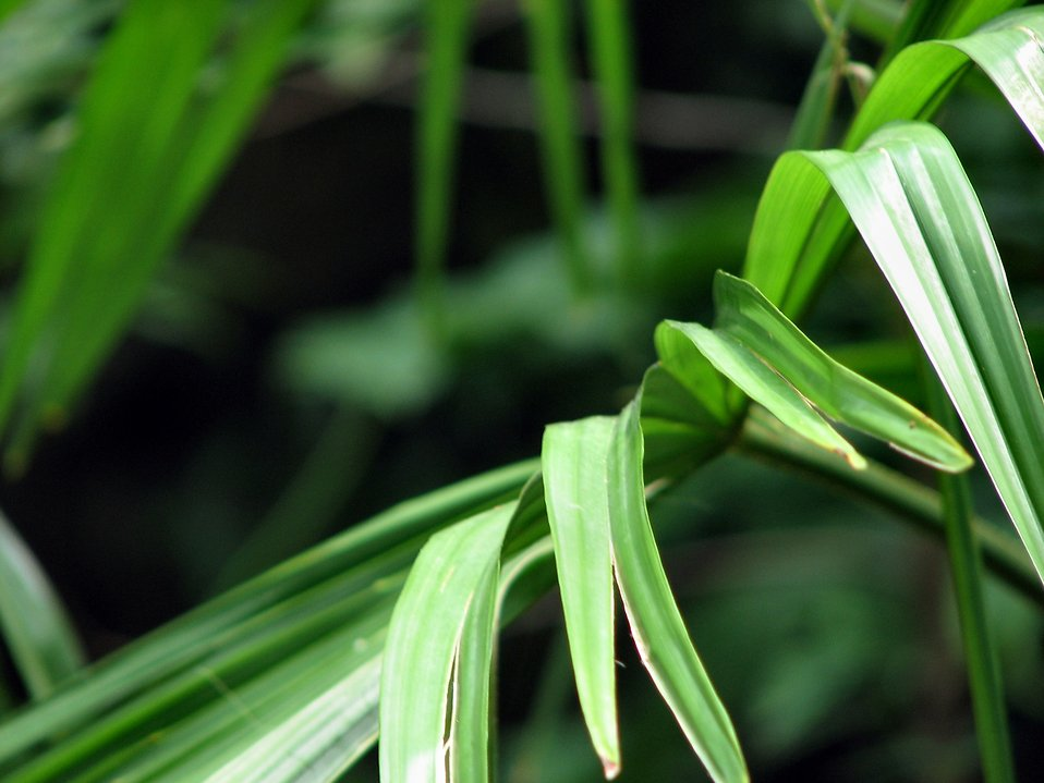 Green tropical leaves : Free Stock Photo