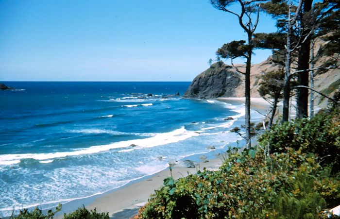 Tropical beach : Free Stock Photo