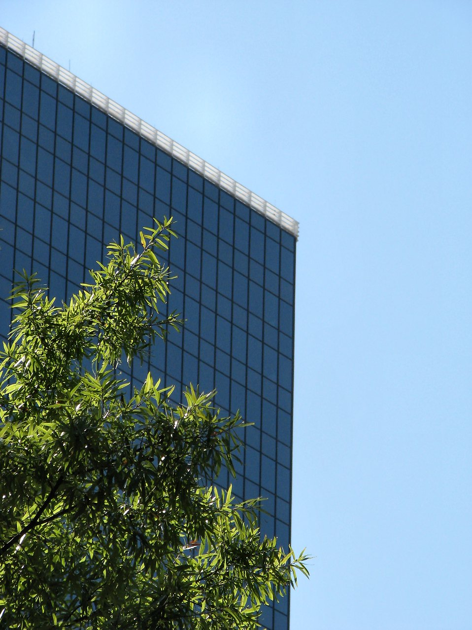 Modern glass building : Free Stock Photo