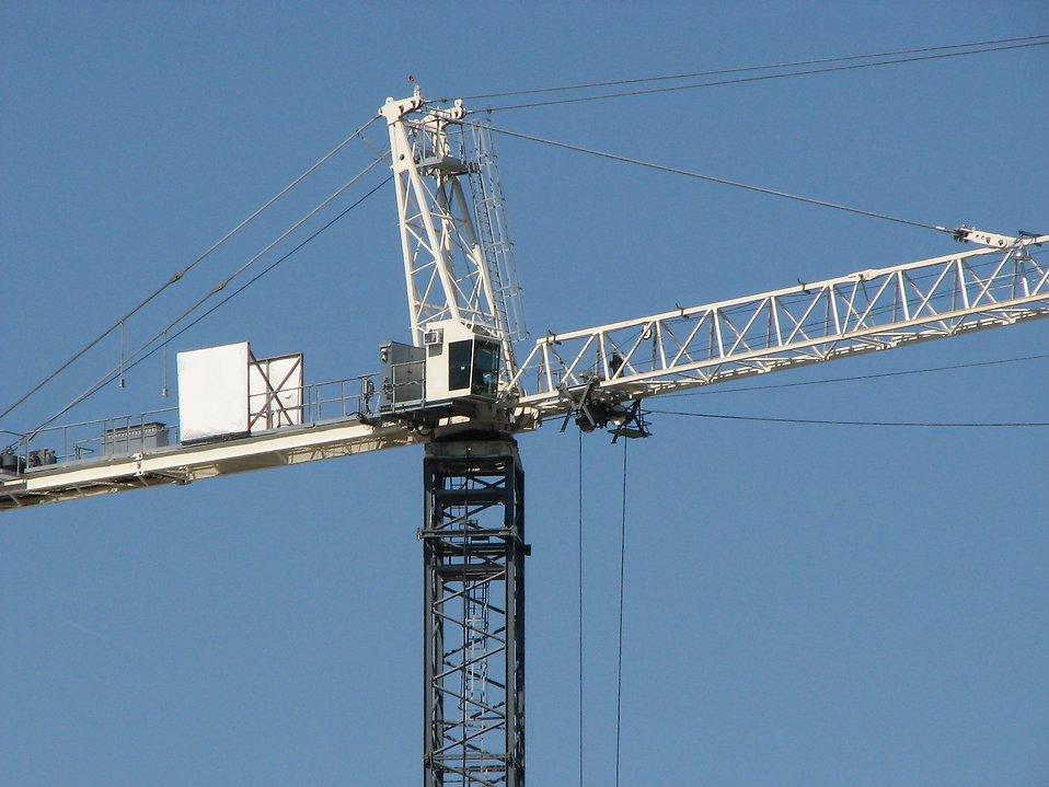 White crane : Free Stock Photo