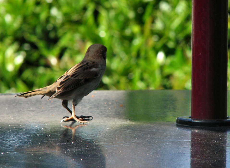Small bird on a table : Free Stock Photo