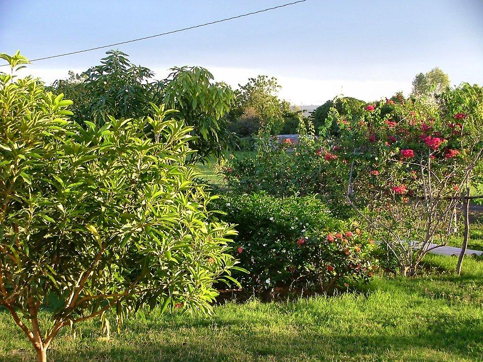Tropical foliage : Free Stock Photo