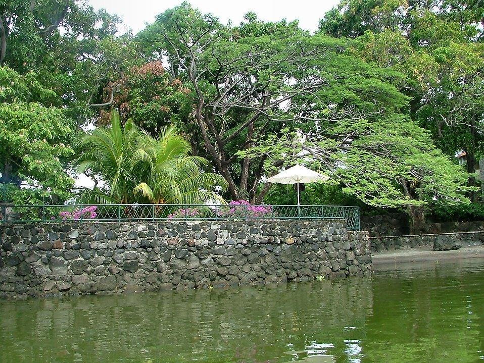 Tropical river bank : Free Stock Photo