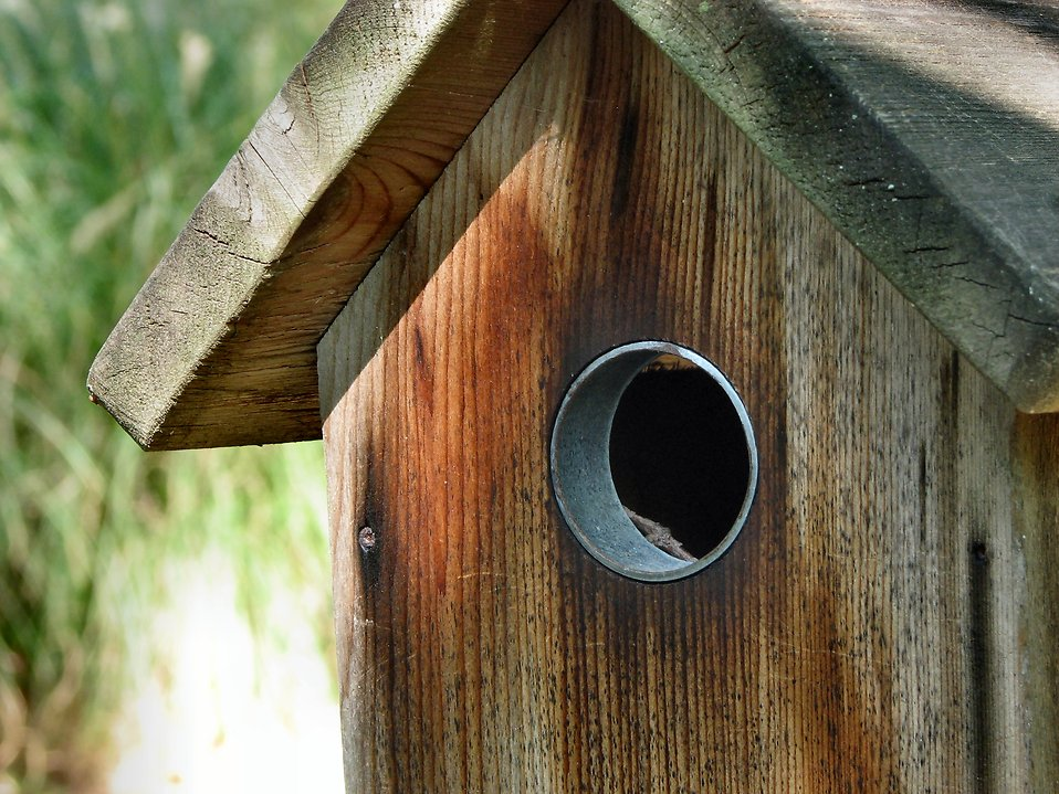 Birdhouse : Free Stock Photo