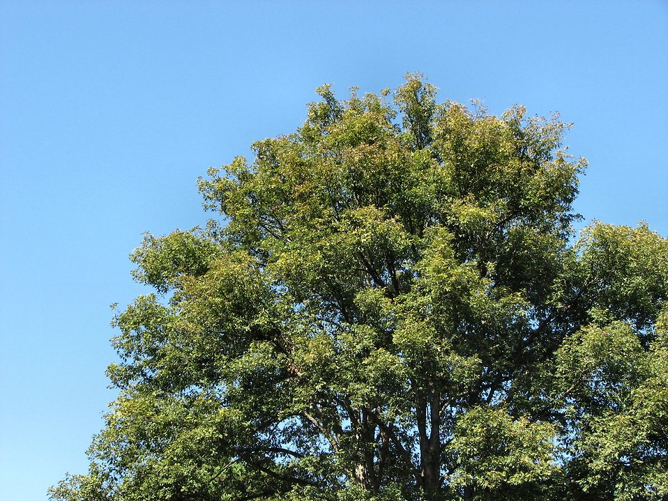 Tree with blue sky : Free Stock Photo