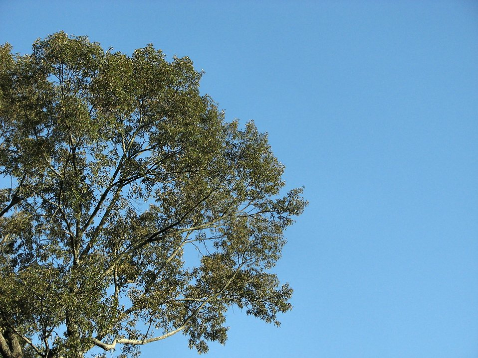 Tree with a blue sky : Free Stock Photo