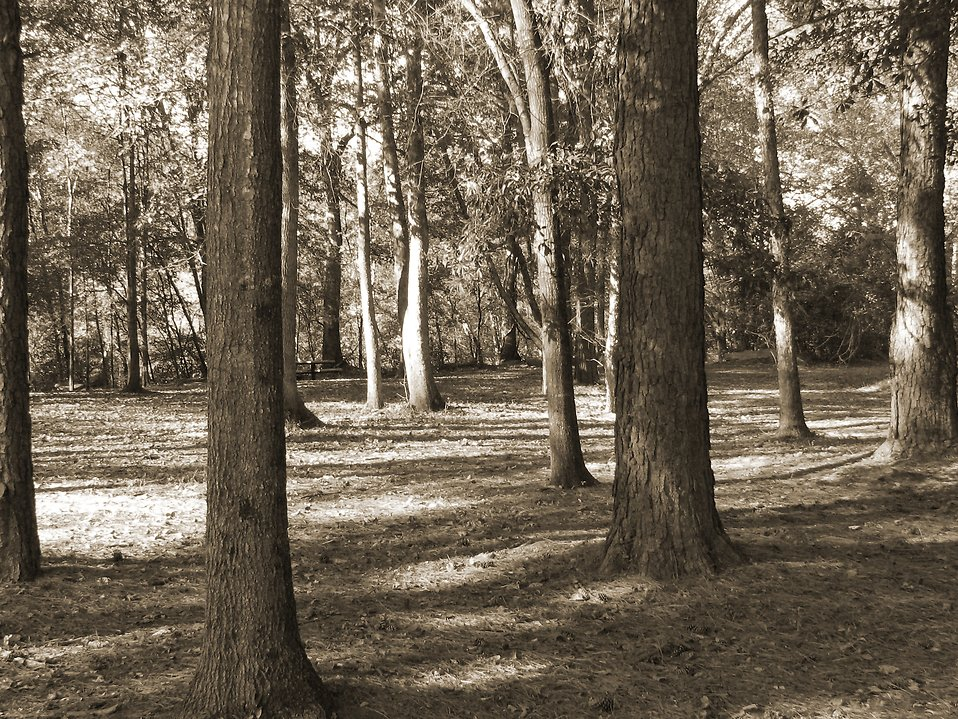 Creepy woods : Free Stock Photo
