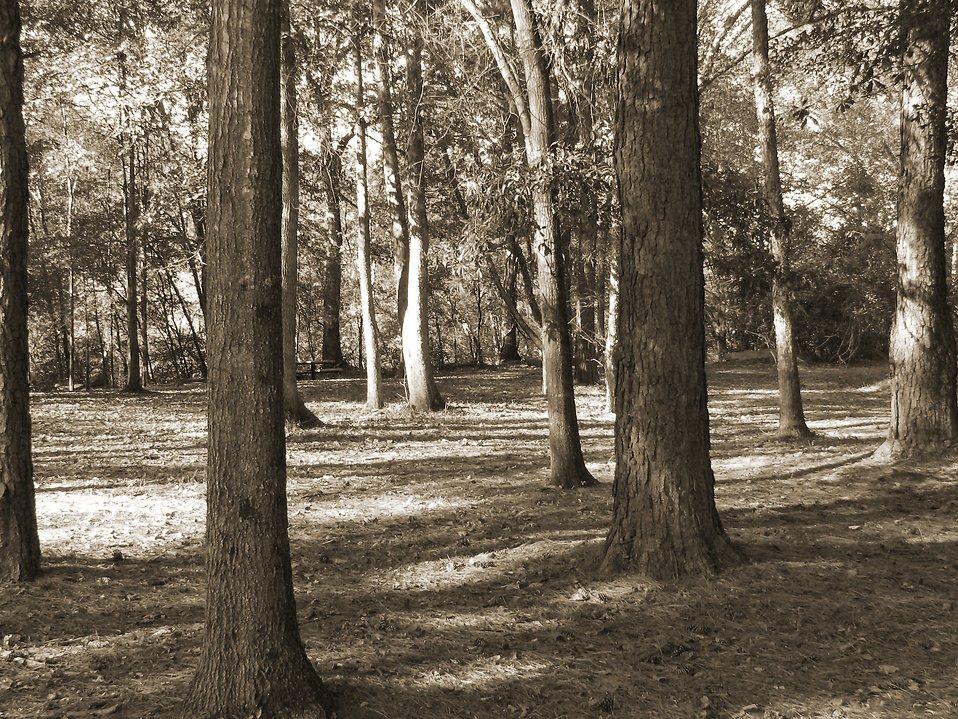 Creepy woods : Free Stock Photo