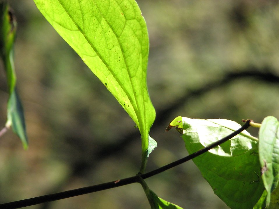 A bright green leaf : Free Stock Photo