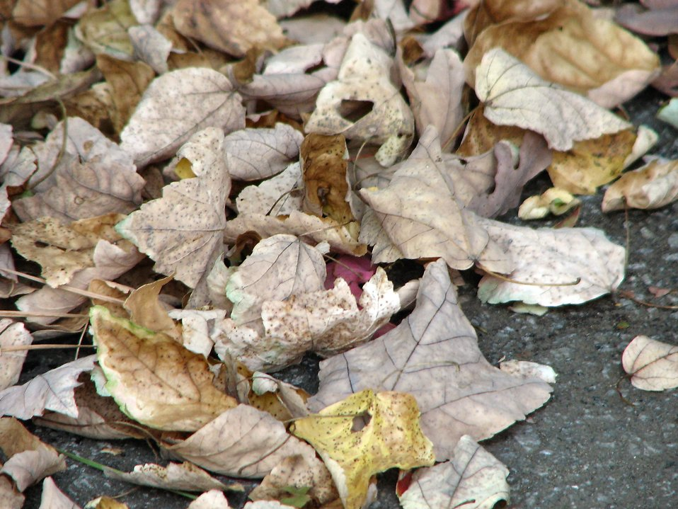 Autumn leaves : Free Stock Photo