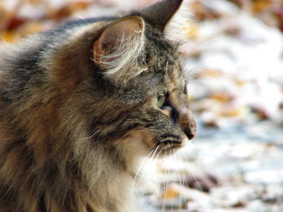 Cat closeup : Free Stock Photo
