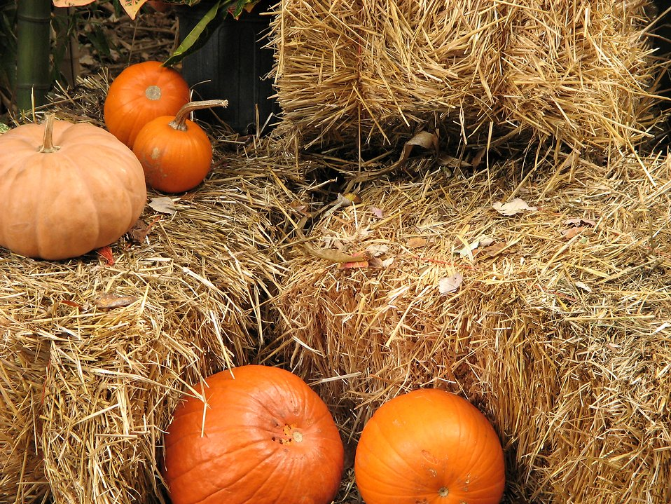 Pumpkins on straw bales : Free Stock Photo