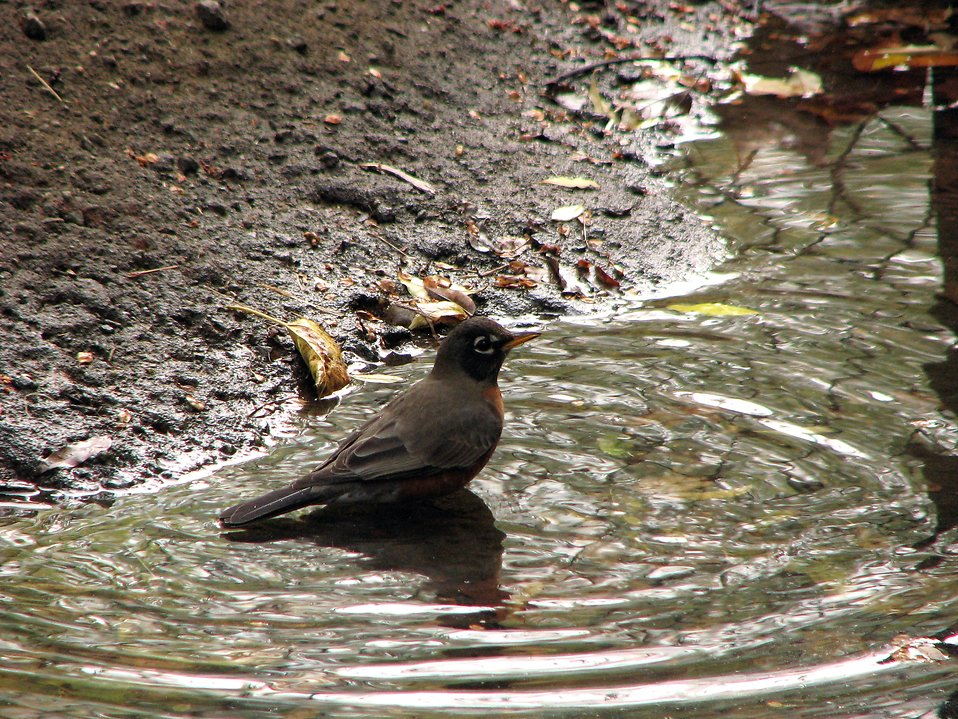 Flying Birds Free Stock Photos Download 3 416 Free Stock: Bird Standing In A Puddle