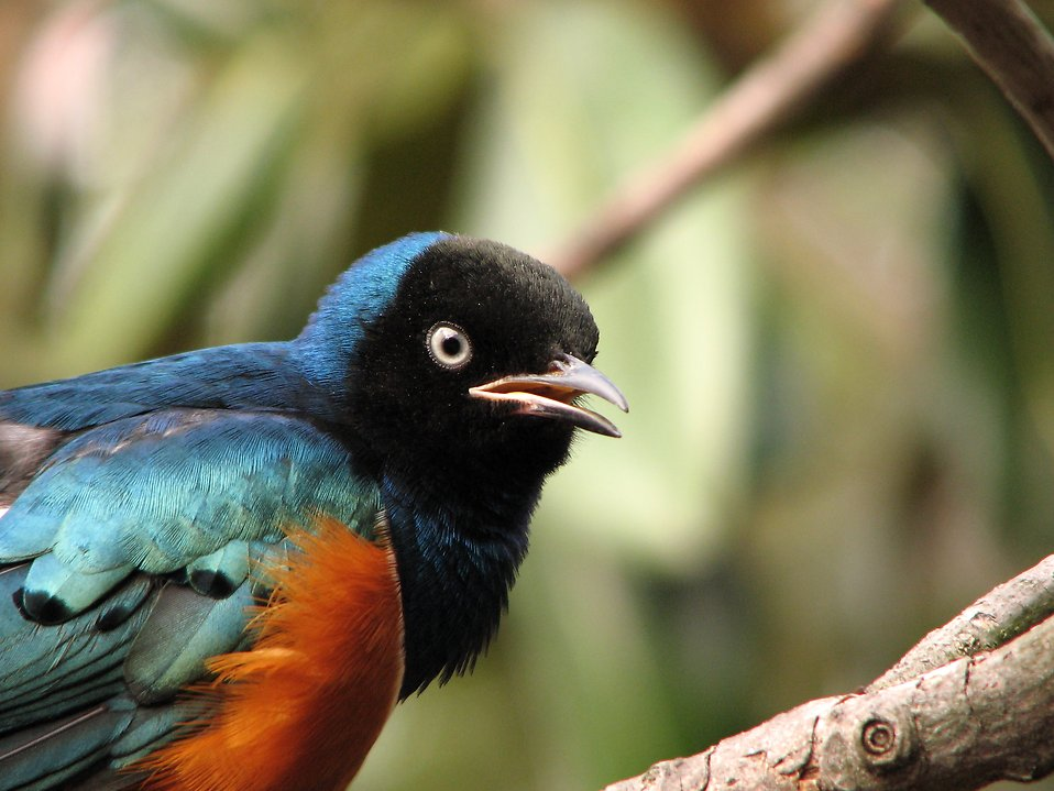 Closeup of a colorful bird : Free Stock Photo