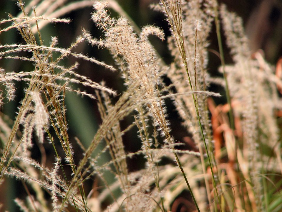 Closeup of tall grass : Free Stock Photo