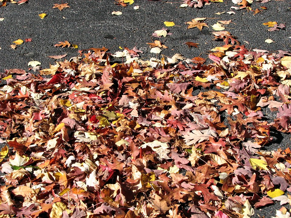 Autumn leaves : Free Stock Photo