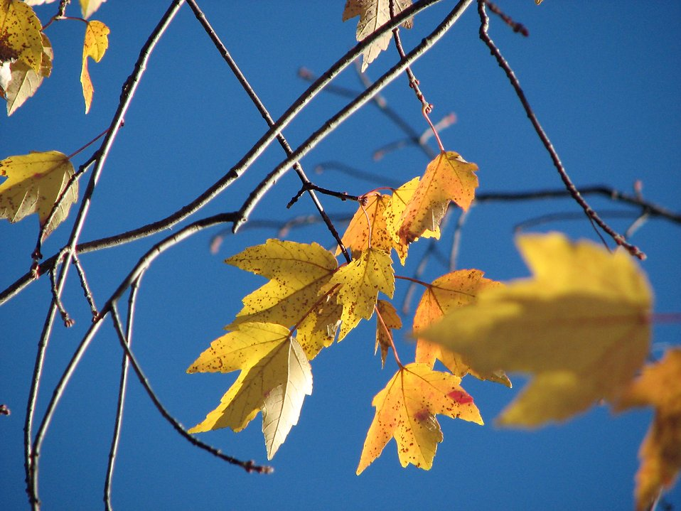 Closeup of autumn leaves : Free Stock Photo
