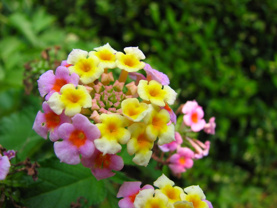 Closeup of purple and yellow flowers : Free Stock Photo