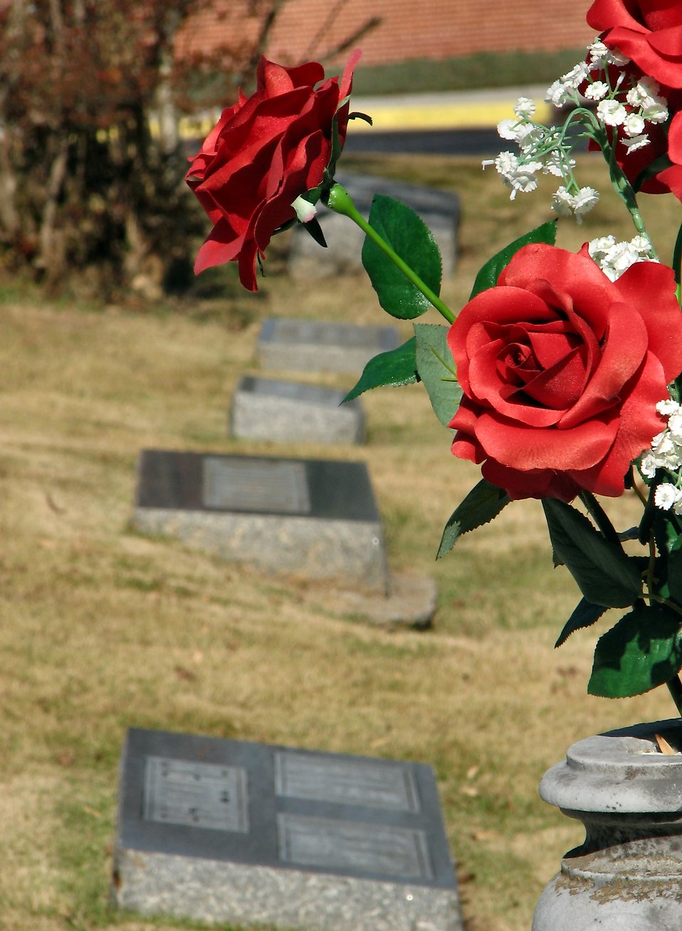 Closeup of roses in a cemetary : Free Stock Photo