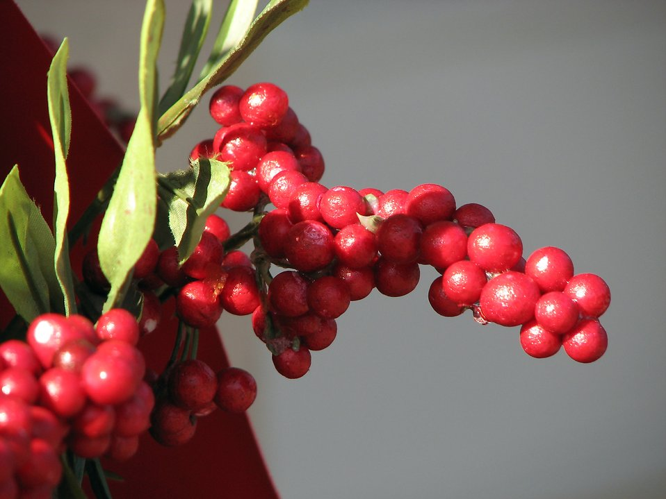 Christmas red berries.
