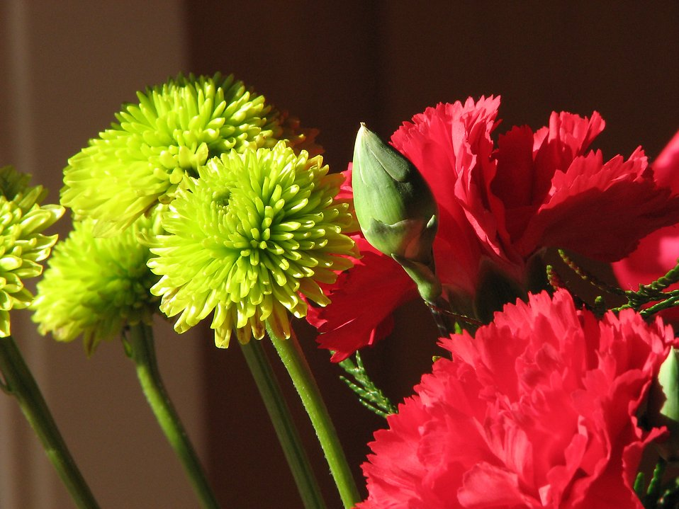Closeup of red and green flowers in window sunlight : Free Stock Photo