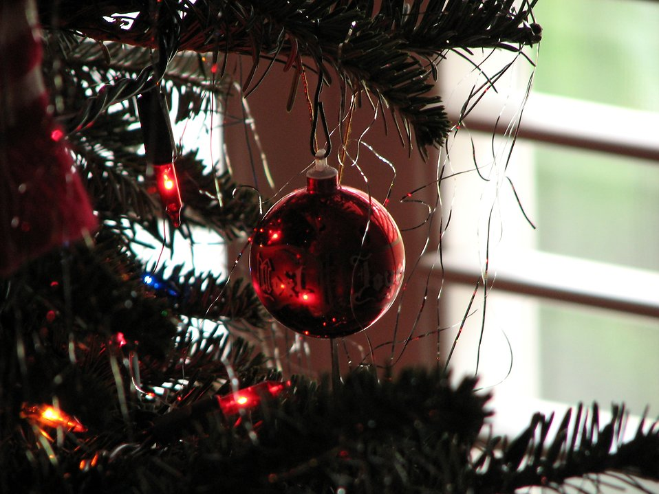 A red glass ornament in a Christmas tree : Free Stock Photo