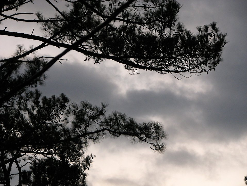 Trees in an overcast sky : Free Stock Photo