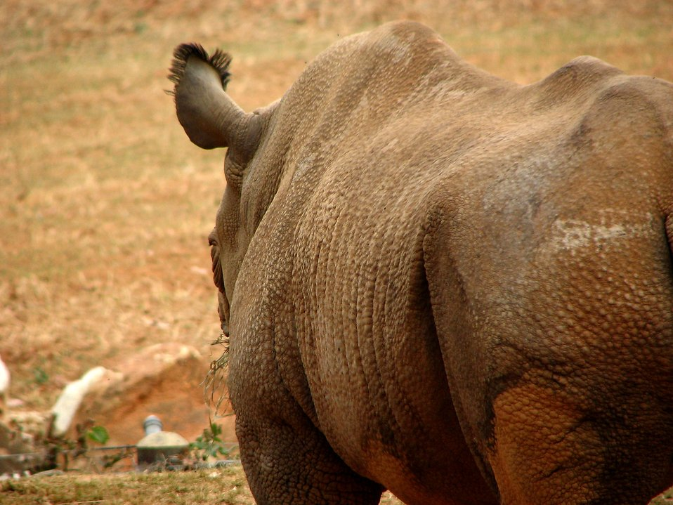 Closeup of a rhinoceros : Free Stock Photo