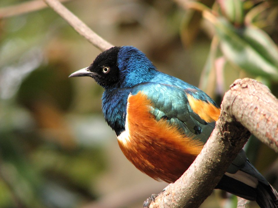 Closeup of a colorful bird : Free Stock Photo