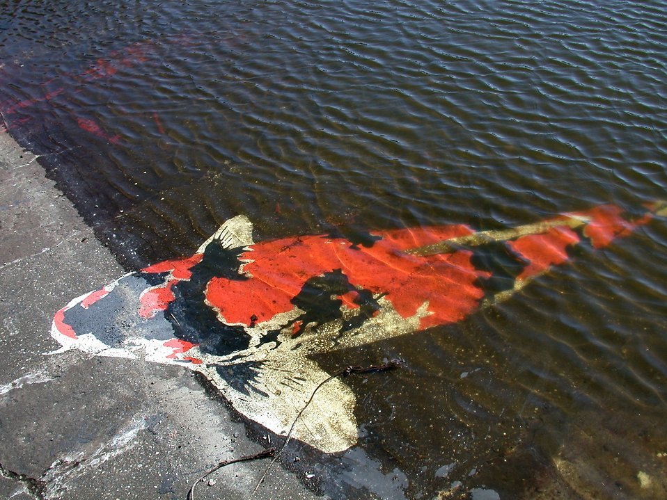 Large red fish in the water : Free Stock Photo