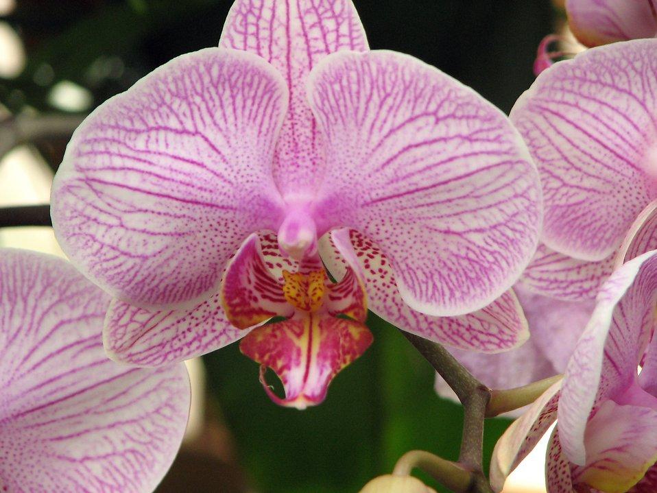 Closeup of purple orchids : Free Stock Photo