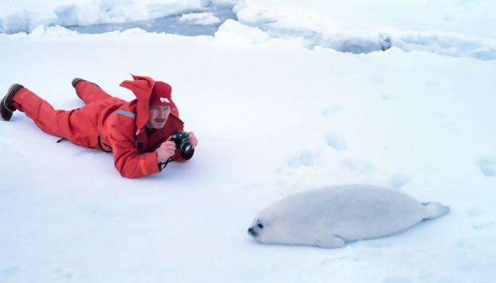 Man taking photo of a seal : Free Stock Photo