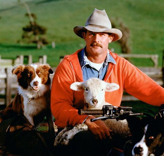 Farmer with dogs and sheep : Free Stock Photo