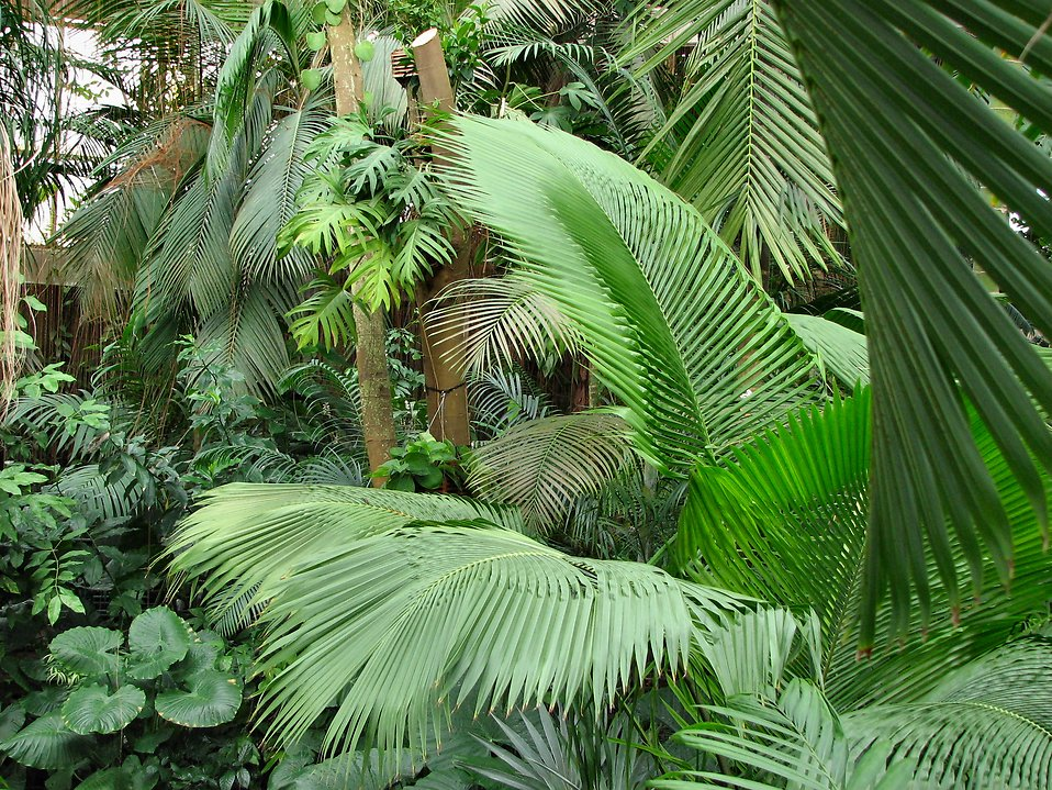 Very thick tropical foliage : Free Stock Photo