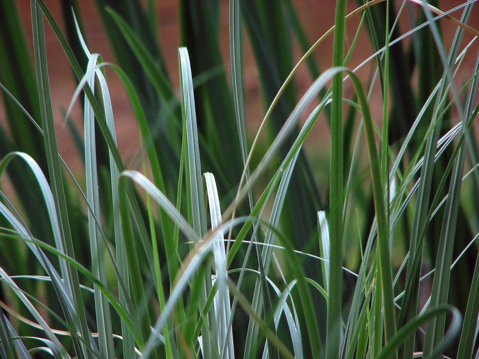 Closeup of dark green grass : Free Stock Photo
