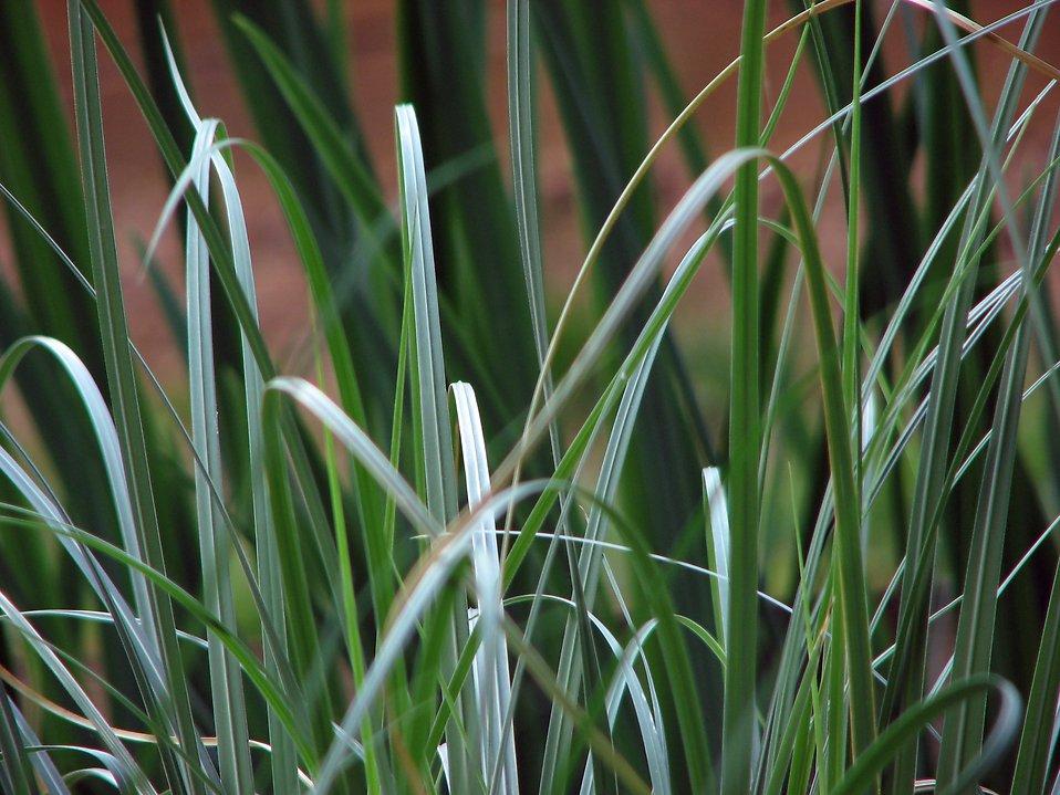 Closeup of dark green grass : Free Stock Photo