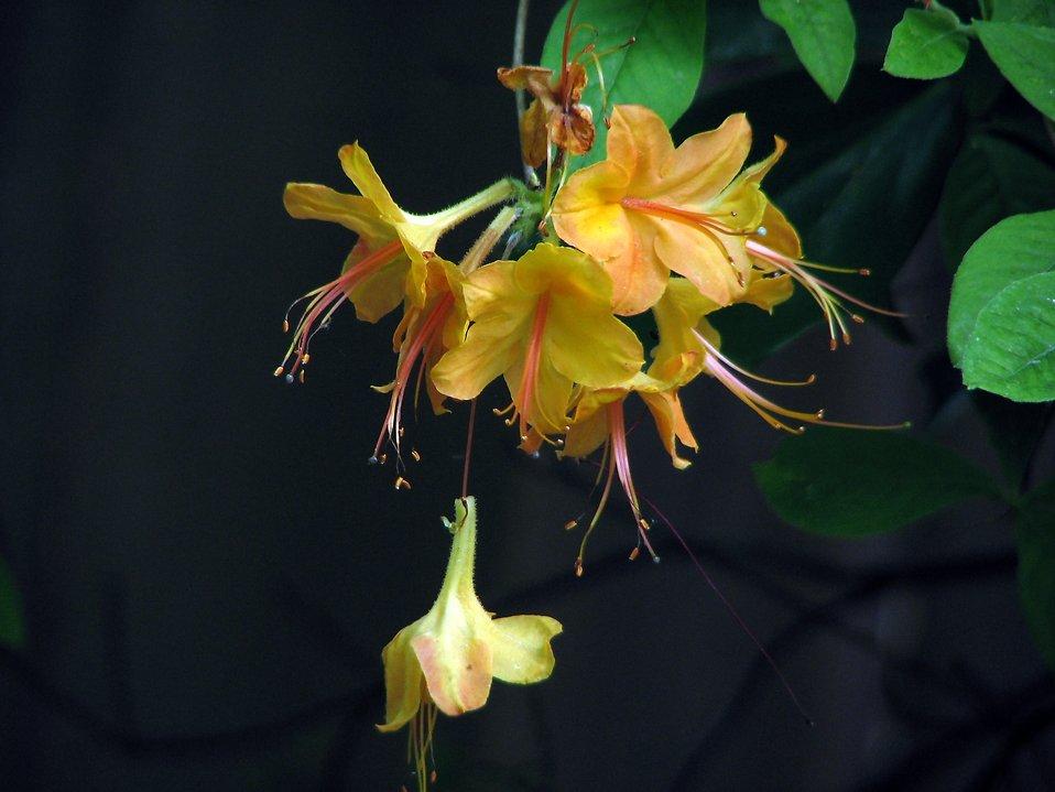 Closeup of yellow flowers : Free Stock Photo