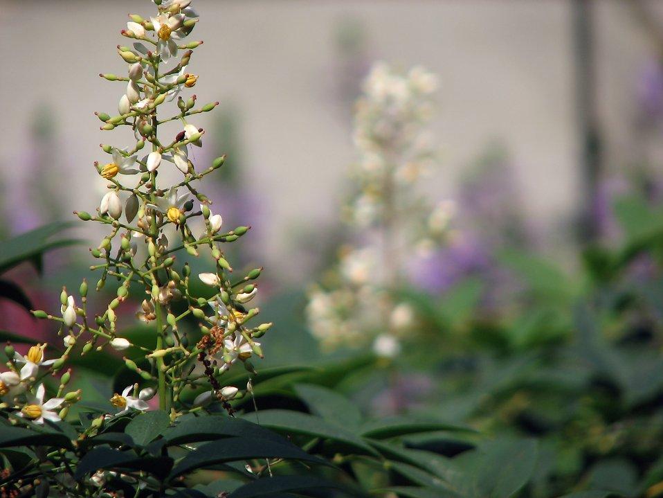 Closeup of small white flowers : Free Stock Photo