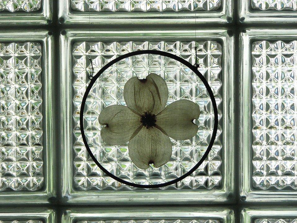 Flower petal decoration on glass : Free Stock Photo