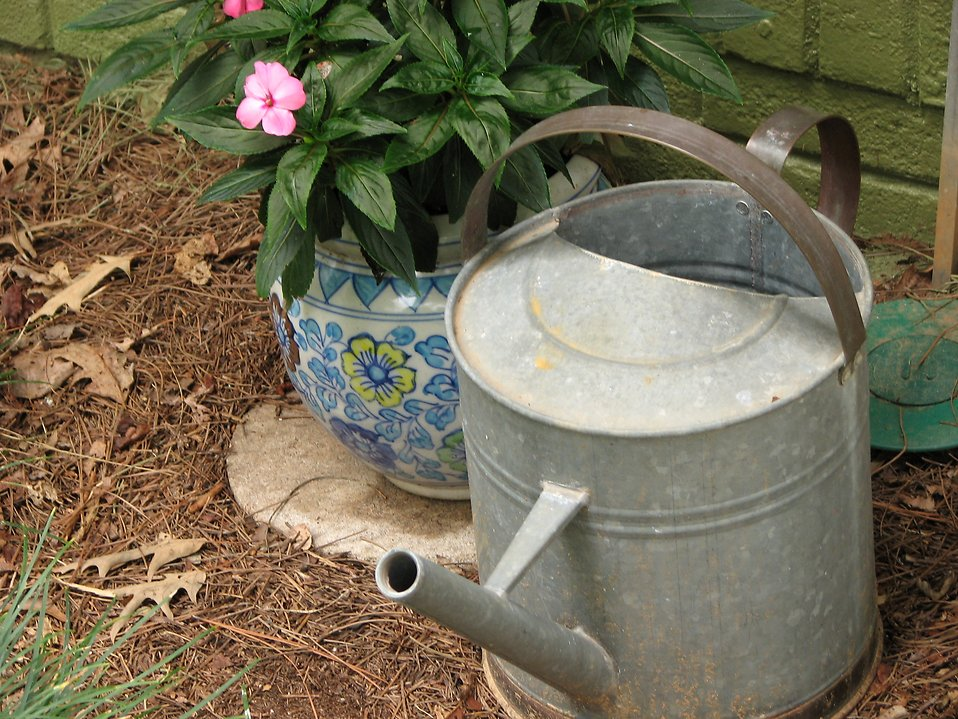 Potted flower and an old metal watering can : Free Stock Photo